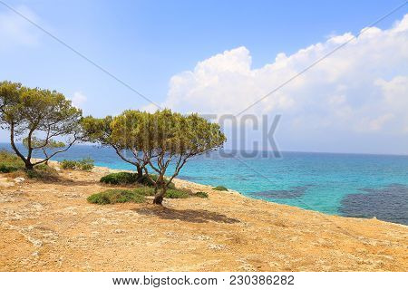 Beautiful View With Turquoise Sea And Coniferous Trees, Balearic Islands, Majorca, Spain