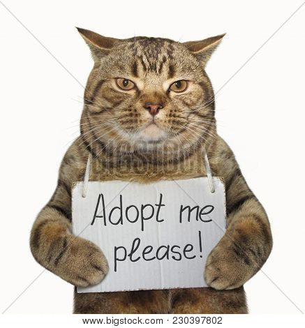 The Lonely Cat With A Sign Around His Neck. It Says