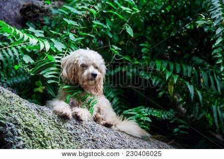 Little Fluffy Stray Dog On The Nature