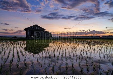 Dilapidated Wooden House In The Middle Of Paddy Field Over Beautiful Sunrise Background. Motion Effe