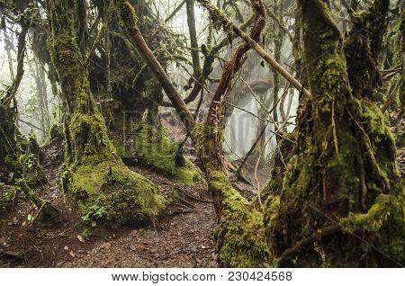 Beautiful Nature, Mossy Forest At Cameron Highland, Malaysia.