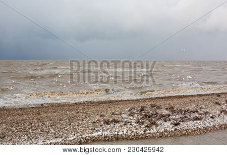 Storm On The Sea Of Azov. Snow, Wind And Seagulls Flying Over The Water