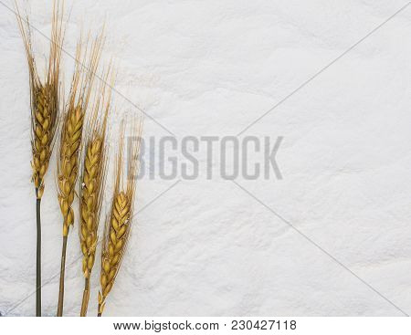 Golden Ripe Ears Of Corn Lying On A Background Of White Crumbly Flour