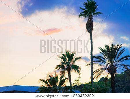 Palm Trees In Santa Teresa Di Riva Near Messina, Sicily, Italy. At Sunset