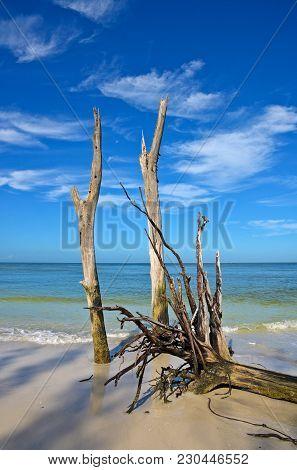 Beautiful Weathered Driftwood