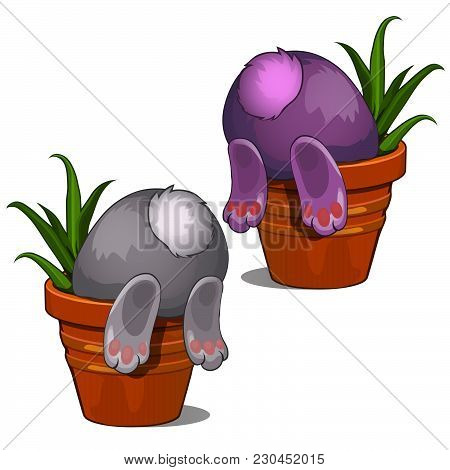 The Easter Bunny Is Sticking Out Of The Pot. Sample Greeting Cards, Humorous Poster, Invitations To