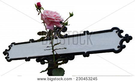 A Sign Post With Roses And Thorns Wrapped Around The Pole.