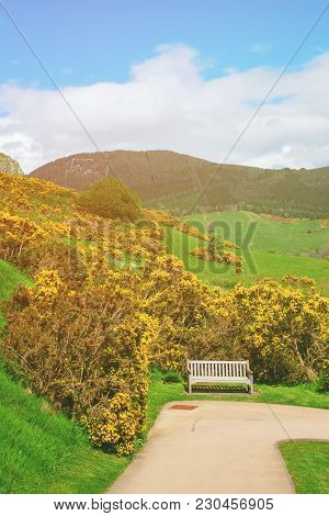 Bench Among The Nature Of Loch Ness In Scotland. Loch Ness Is A City In The Highlands In Scotland In
