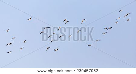A Flock Of Seagulls Against A Blue Sky . In The Park In Nature