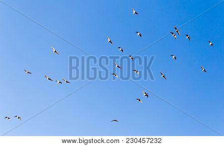 A Flock Of Seagulls Against A Blue Sky .