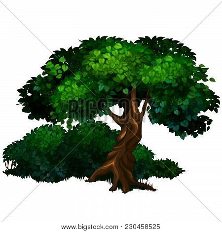 Ancient Deciduous Tree In The Park. Landscaping And Wildlife. Vector Illustration.