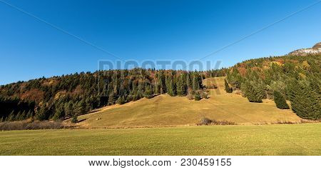 Forest In Autumn With Pines, Beeches And Firs. Val Di Sella (sella Valley), Borgo Valsugana, Trento,