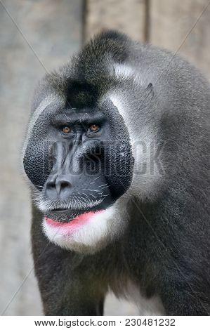 An Impressive Male Drill Close Up Portrait