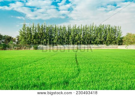 Rice Field On Terrace Hillside In Nan, Thailand. Natural Landscape Of Rice Farm. Cultivation Agricul
