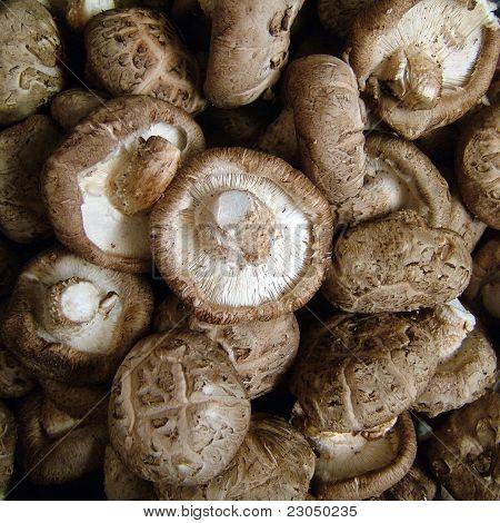 Raw Chinese Mushrooms.