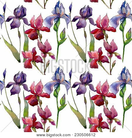 Wildflower Iris Flower Pattern In A Watercolor Style. Full Name Of The Plant:  Iris. Aquarelle Wild