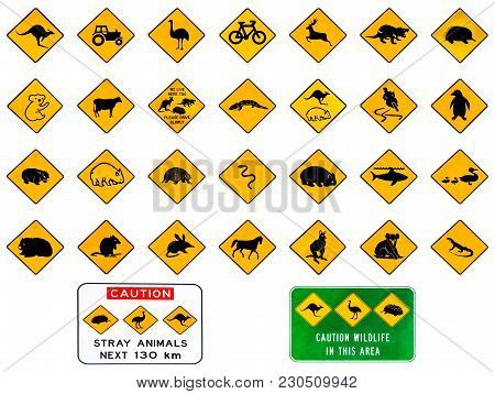 Australian Warning Road Signs From Australia Highways. Wildlife Animals: Emu, Echidna, Tasmanian Dev