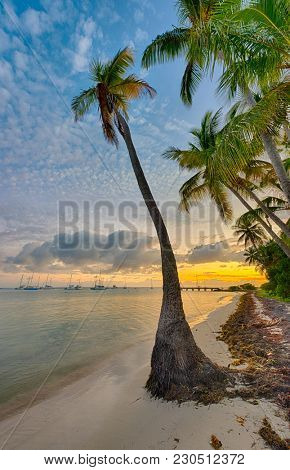 Sunset over a single palm tree at Anse Champagne beach in Saint Francois, Guadeloupe, Caribbean