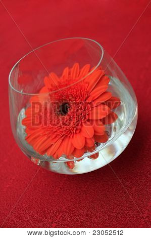 table decoration, red flower