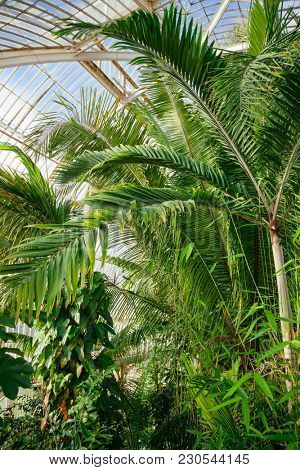 Exotic rainforest trees and plants at greenhouse with tropical conditions