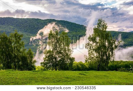 Fog Rising Behind The Forest On A Hillside. Beautiful Scenery In Mountainous Area At Sunrise