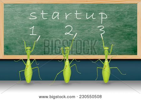 Startup Campaign Concept By Giant Asian Mantises