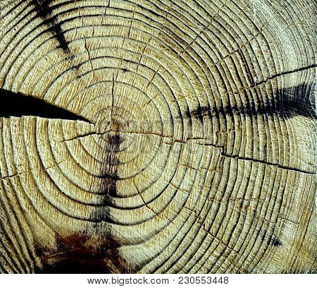 Wood Texture Cut Tree Trunk Detail Background