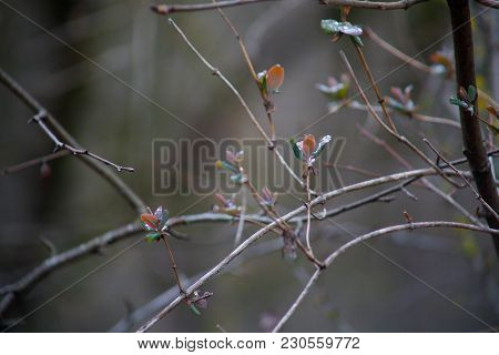 Tree Branches In Fog With The Gray Sky Background. Close Up View. Selective Focus.