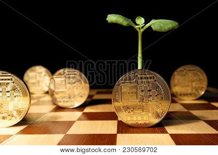 Growth In Investment In The Ico Industry. Green Sprout From Gold Coins Of E-currency As A Concept Of