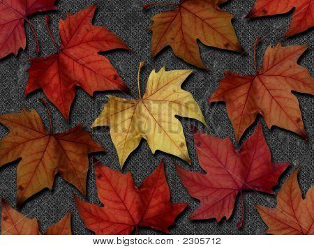 Autumn Leaves I