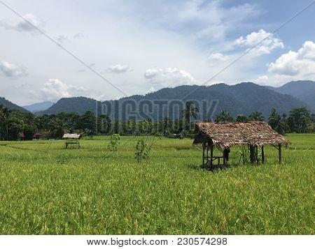 A Lush Green Rice Field On Sumatra, Indonesia