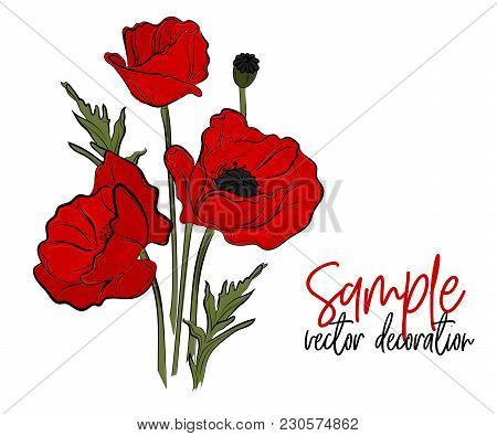 Vector Red Poppies Flowers. Bloom Symbol Of Spring - Botany Illustration. Opium Season Holiday Plant
