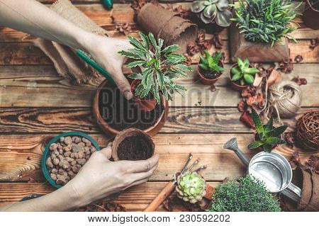 The Florist Behind Work. Hands Of The Florist Replace A Plant In A New Pot.