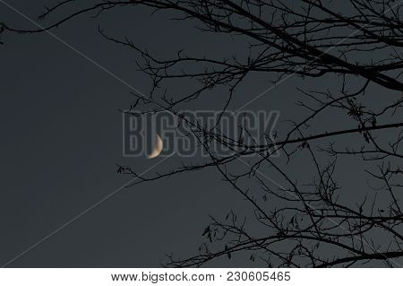 Quarter Of Moon Among Bare Branches, Night Hours