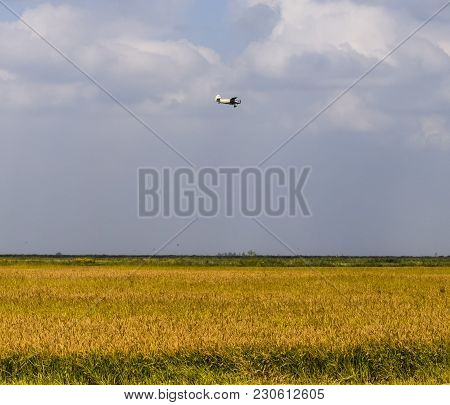 An Agricultural Plane Flies Over A Field Of Rice. Air Application Of Herbicides.