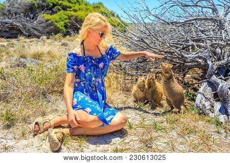 Three Quokka Sniffing Girl Hand In A Sunny Day Outdoors, Summer Season, Australia. Blonde Caucasian