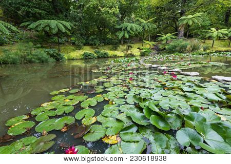 Beautiful lake with water lily at Terra Nostra park, Sao Miguel Iskand, Azores