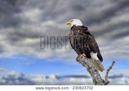 A Bald Eagle Perches Proudly Against A Blue Sky With Dark Clouds Approaching.