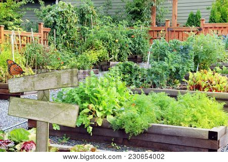 Lush and organic community vegetable, fruit and herb garden in summer with blank sign. Add your own text.
