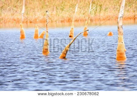 Copper Red Polluted Lake Mine In Gossan Cobre Huelva Spain