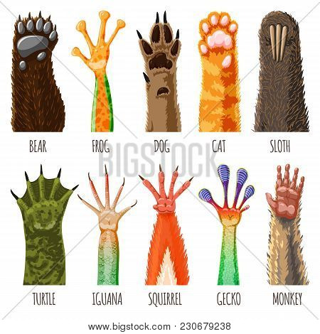 Animal Paw Vector Animalistic Pets Claw Or Hand Of Cat Or Dog And Pawed Bear Or Monkey Foot Illustra