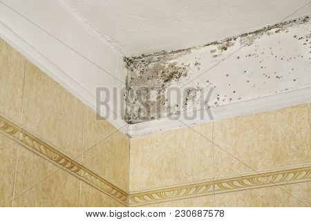 Mold In The Corner Of Bathroom Over Tiles