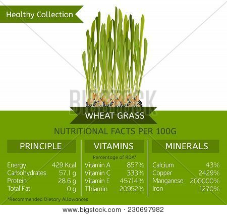 The Wheat Grass Health Benefits. Vector Illustration With Useful Nutritional Facts. Essential Vitami