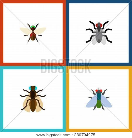 Icon Flat Fly Set Of Mosquito, Buzz, Dung And Other  Objects. Also Includes Fly, Gnat, Hum Elements.