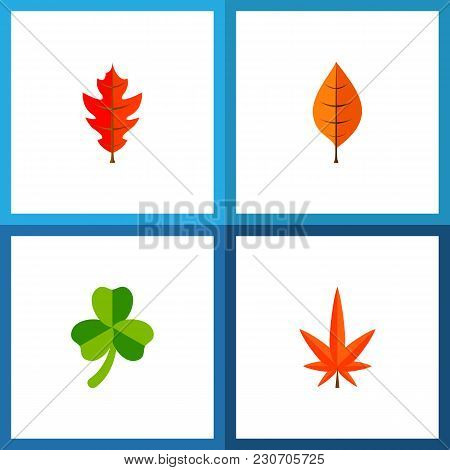 Icon Flat Leaves Set Of Linden, Leafage, Hickory And Other  Objects. Also Includes Leaf, Foliage, As