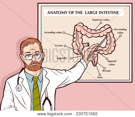 Vector Illustration Of A Doctor Explaining The Large Intestine
