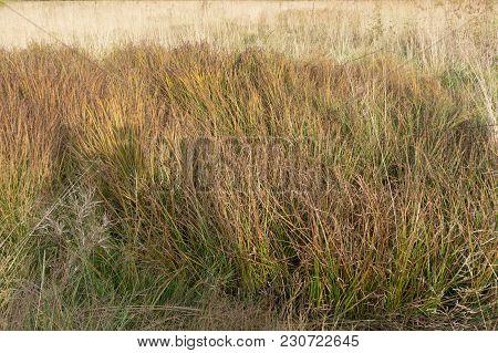 Grassland On Mountains In Autumn  Field Mountain,