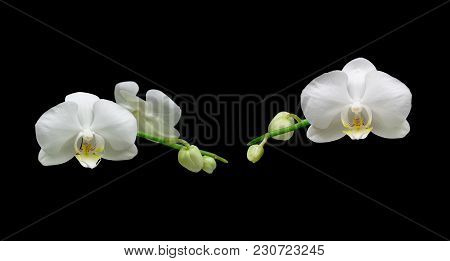 White Orchid Flowers On A Black Background. Horizontal Photo.