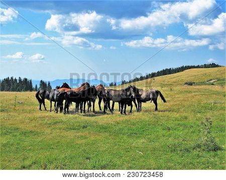 Free Range Horses In The Rhodope Mountains, Bulgaria. Photos Filmed On 28.06.2012 Year.