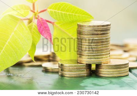 Business Success Concept - Gold Money Coins And Fresh Leaves